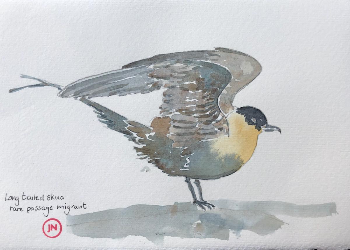 Shetland 2021: Birds