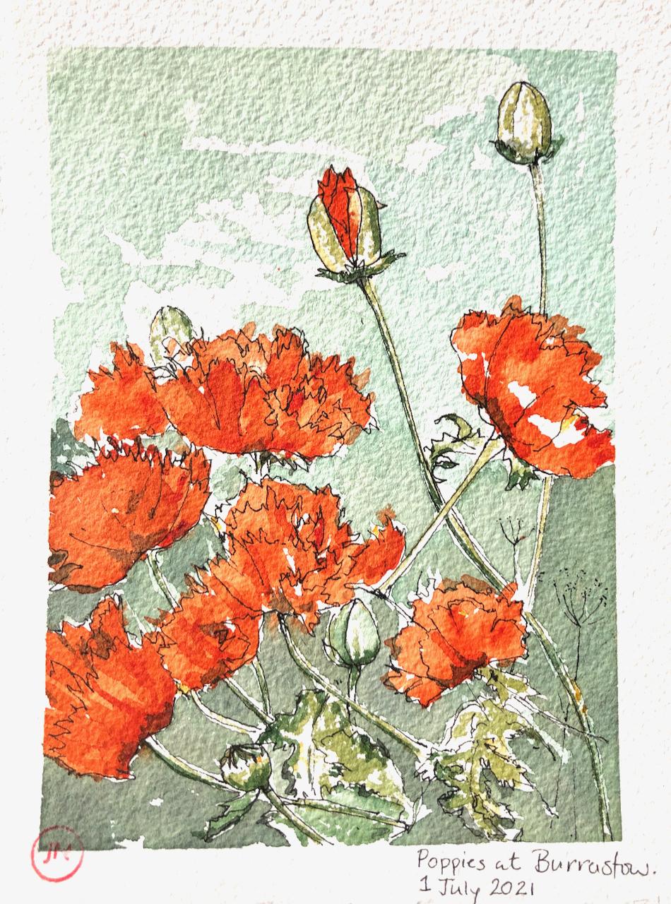 Shetland 2021 –Poppies